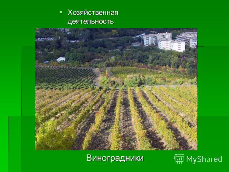 Хозяйственная деятельность Хозяйственная деятельность В культурной флоре главную роль играют виноградники и южные плодовые сады, в том числе цитрусовые, а также фиговые, оливковые и миндальные, кроме того, огородные и зерновые культуры, с преобладани
