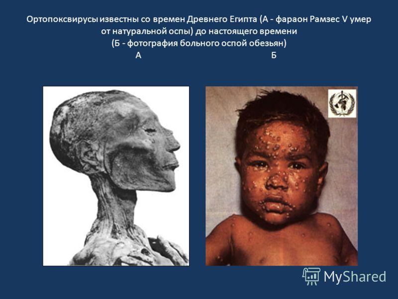 Ортопоксвирусы известны со времен Древнего Египта (А - фараон Рамзес V умер от натуральной оспы) до настоящего времени (Б - фотография больного оспой обезьян) А Б