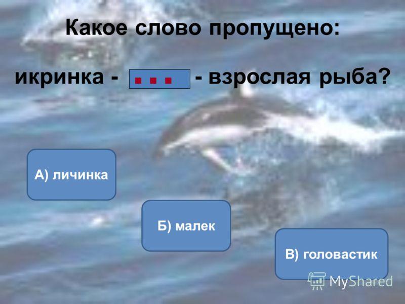 Какое слово пропущено: икринка - … - взрослая рыба? Б) малек А) личинка В) головастик