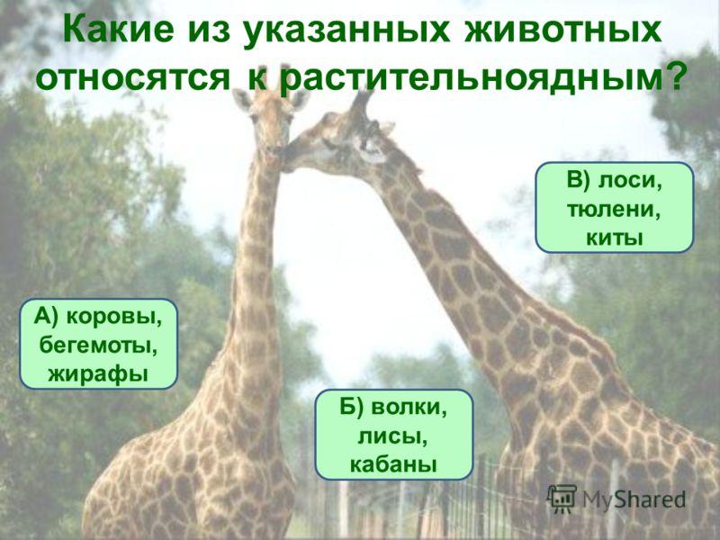 Какие из указанных животных относятся к растительноядным? А) коровы, бегемоты, жирафы Б) волки, лисы, кабаны В) лоси, тюлени, киты
