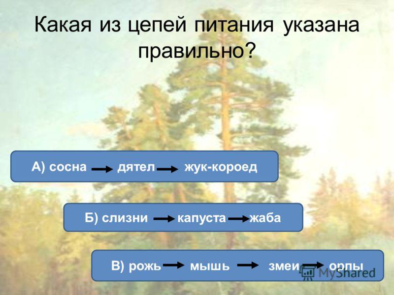 Какая из цепей питания указана правильно? А) сосна дятел жук-короед Б) слизни капуста жаба В) рожь мышьзмеи орлы