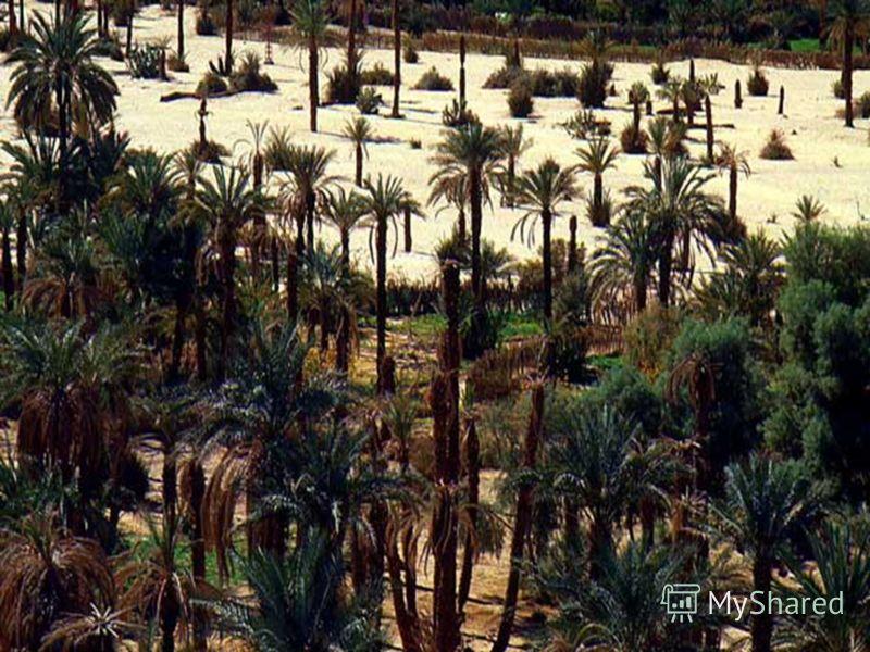 Оазис. В пустыне участки вблизи водоемов богаты растительностью, их называют ОАЗИСАМИ. Вокруг оазисов и пересыхающих озер встречаются засоленные глины с корками солей на поверхности. Деревья растут только по берегам стекающих с гор рек. На окраинах Г