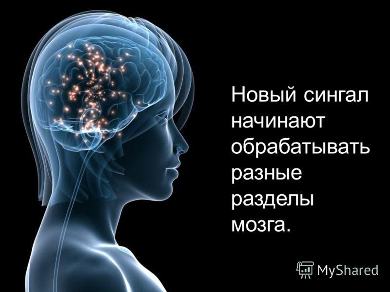 Новый сингал начинают обрабатывать разные разделы мозга.