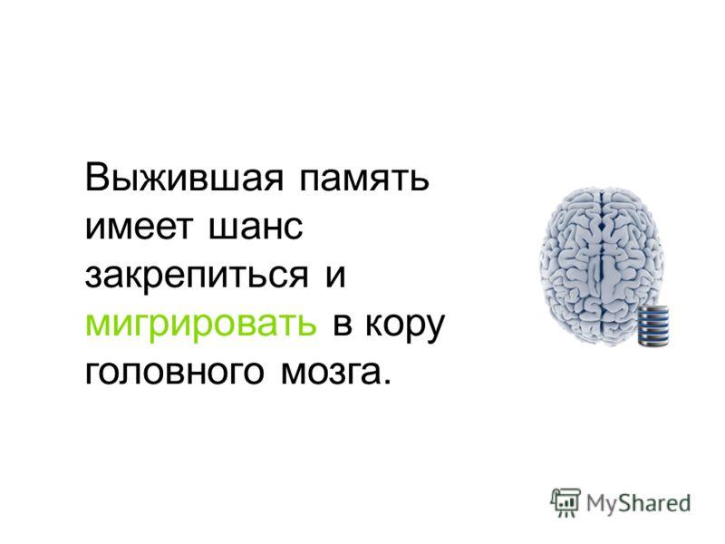 Выжившая память имеет шанс закрепиться и мигрировать в кору головного мозга.