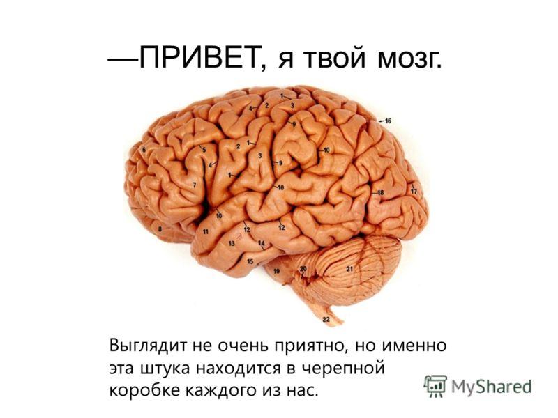 ПРИВЕТ, я твой мозг. Выглядит не очень приятно, но именно эта штука находится в черепной коробке каждого из нас.
