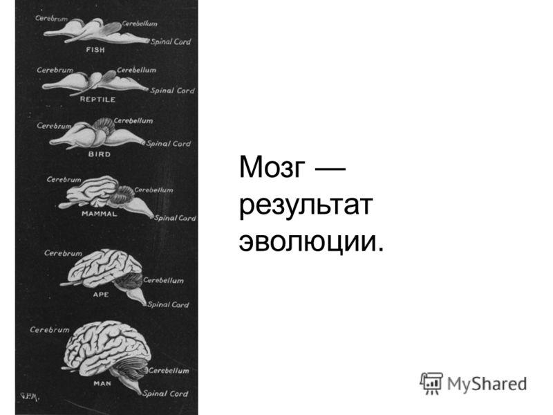 Мозг результат эволюции.