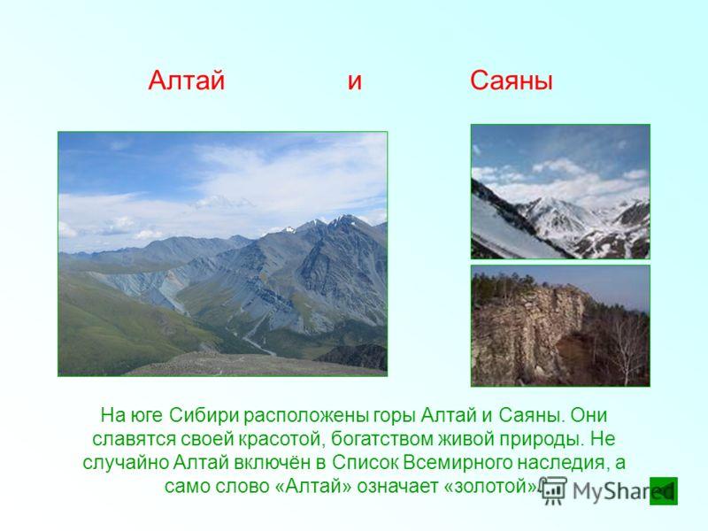 Алтай и Саяны На юге Сибири расположены горы Алтай и Саяны. Они славятся своей красотой, богатством живой природы. Не случайно Алтай включён в Список Всемирного наследия, а само слово «Алтай» означает «золотой».