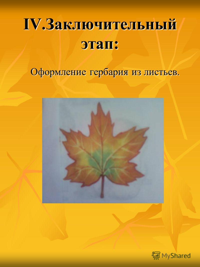 IV.Заключительный этап: Оформление гербария из листьев. Оформление гербария из листьев.