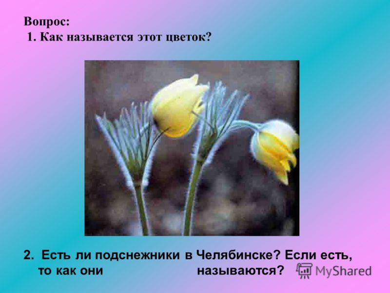 Вопрос: 1. Как называется этот цветок? 2. Есть ли подснежники в Челябинске? Если есть, то как они называются?