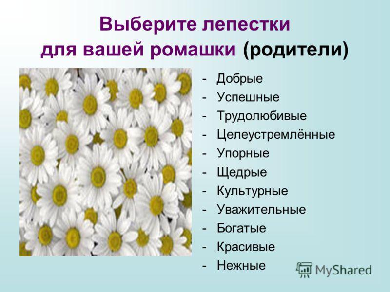 Выберите лепестки для вашей ромашки (родители) -Добрые -Успешные -Трудолюбивые -Целеустремлённые -Упорные -Щедрые -Культурные -Уважительные -Богатые -Красивые -Нежные