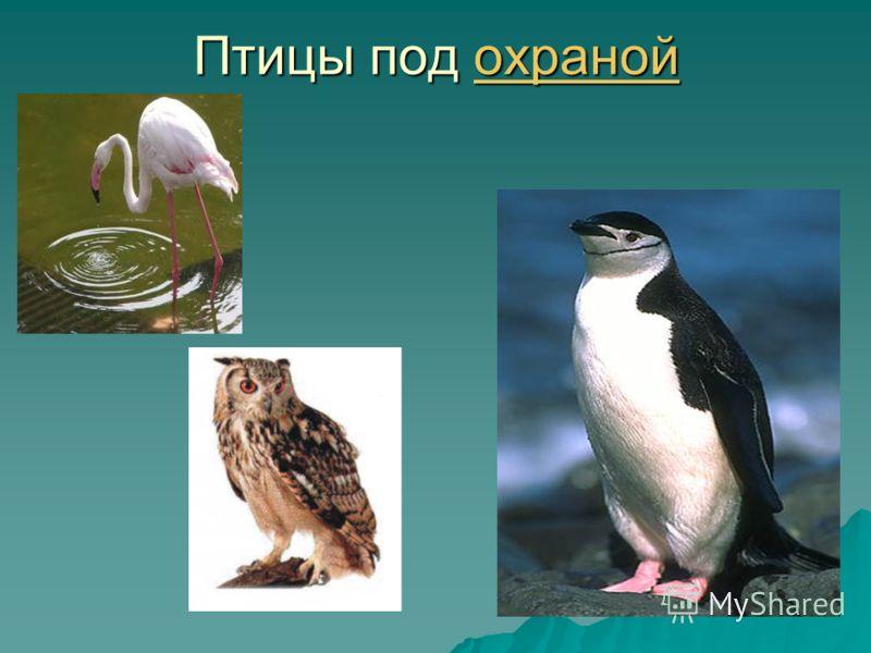 Птицы под охраной охраной