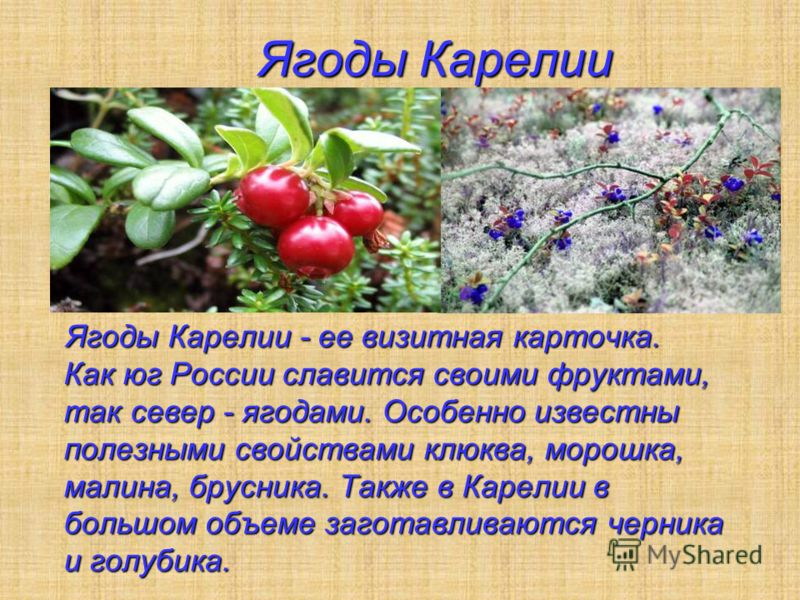 Ягоды Карелии Ягоды Карелии Ягоды Карелии - ее визитная карточка. Как юг России славится своими фруктами, так север - ягодами. Особенно известны полезными свойствами клюква, морошка, малина, брусника. Также в Карелии в большом объеме заготавливаются