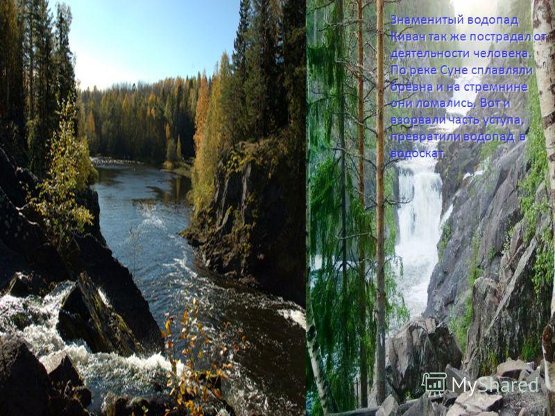 Знаменитый водопад Кивач так же пострадал от деятельности человека. По реке Суне сплавляли брёвна и на стремнине они ломались. Вот и взорвали часть уступа, превратили водопад в водоскат.