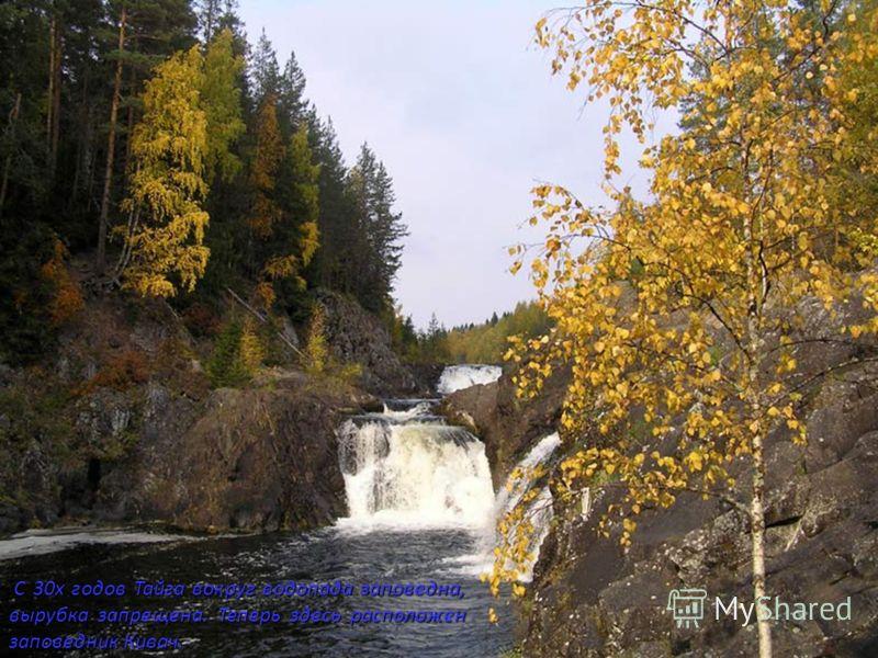 С 30х годов Тайга вокруг водопада заповедна, вырубка запрещена. Теперь здесь расположен заповедник Кивач. С 30х годов Тайга вокруг водопада заповедна, вырубка запрещена. Теперь здесь расположен заповедник Кивач.