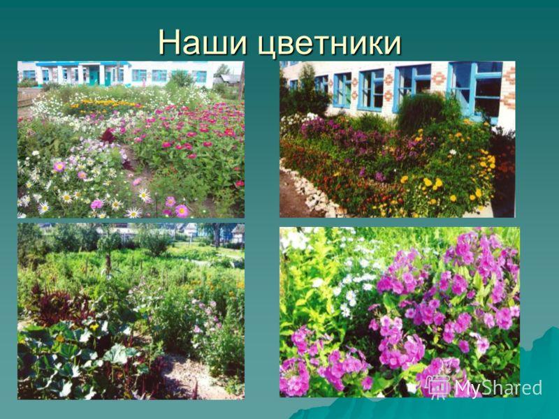 Наши цветники
