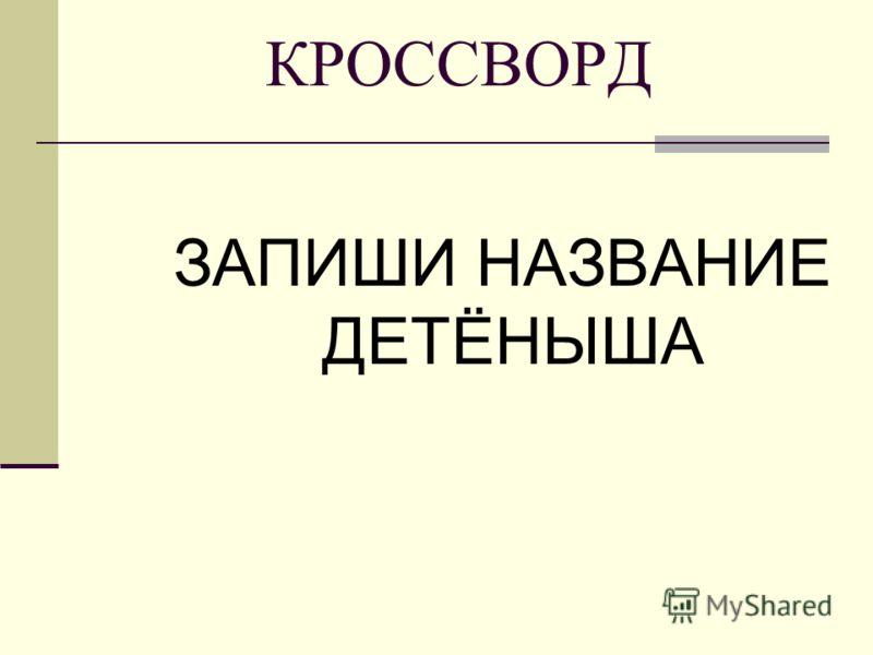 КРОССВОРД ЗАПИШИ НАЗВАНИЕ ДЕТЁНЫША