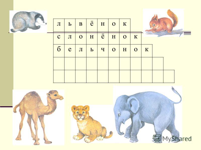 львёнок слонёнок бельчонок