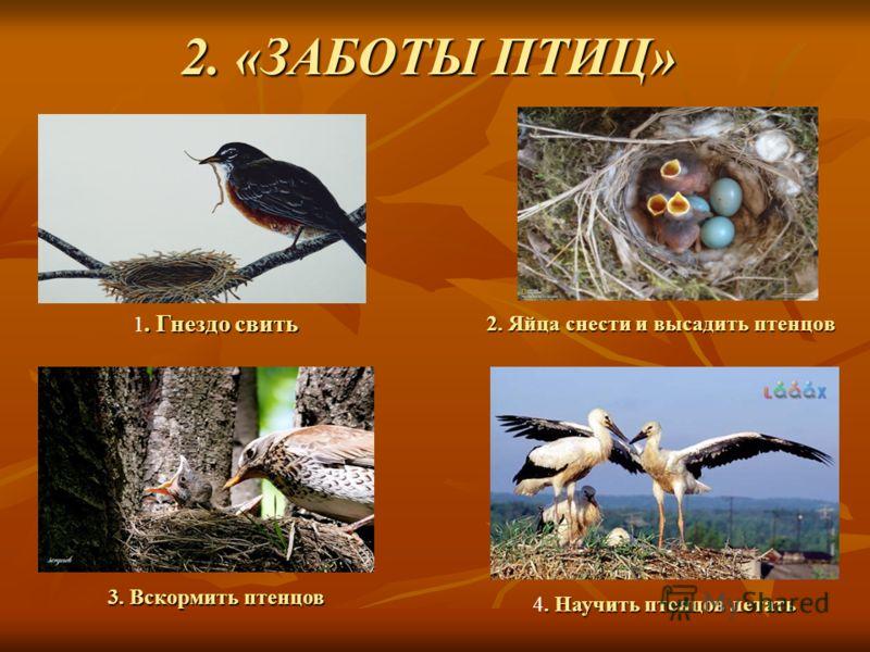 2. «ЗАБОТЫ ПТИЦ» 2. Яйца снести и высадить птенцов. Гнездо свить 1. Гнездо свить 3. Вскормить птенцов. Научить птенцовлетать 4. Научить птенцов летать