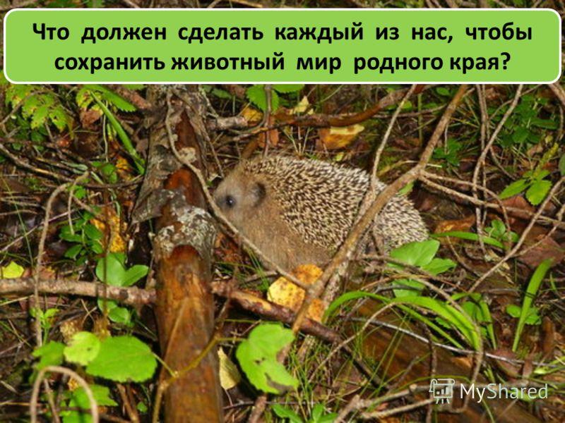 Что должен сделать каждый из нас, чтобы сохранить животный мир родного края?