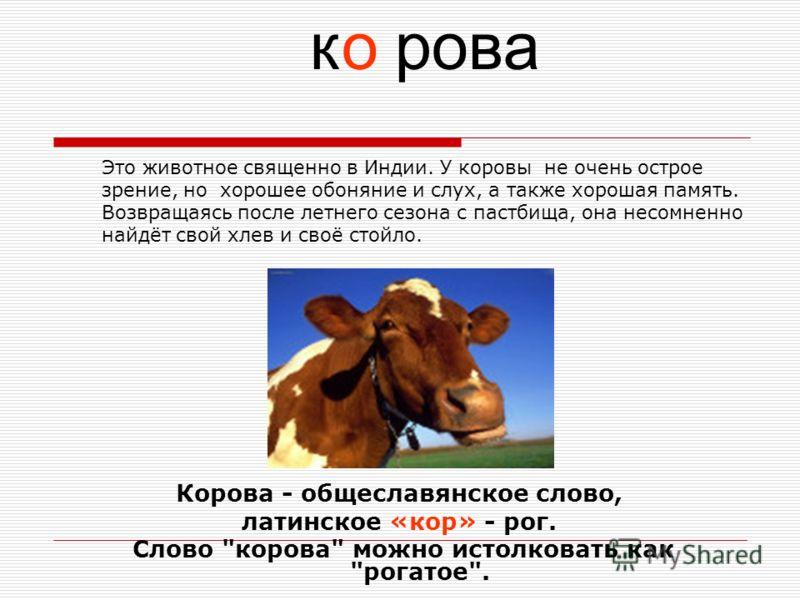 Это животное священно в Индии. У коровы не очень острое зрение, но хорошее обоняние и слух, а также хорошая память. Возвращаясь после летнего сезона с пастбища, она несомненно найдёт свой хлев и своё стойло. Корова - общеславянское слово, латинское «