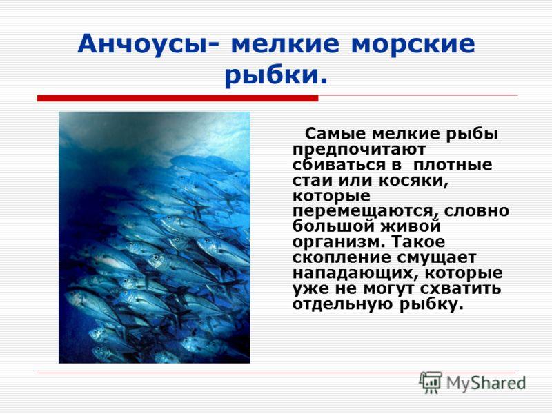 Анчоусы- мелкие морские рыбки. Самые мелкие рыбы предпочитают сбиваться в плотные стаи или косяки, которые перемещаются, словно большой живой организм. Такое скопление смущает нападающих, которые уже не могут схватить отдельную рыбку.