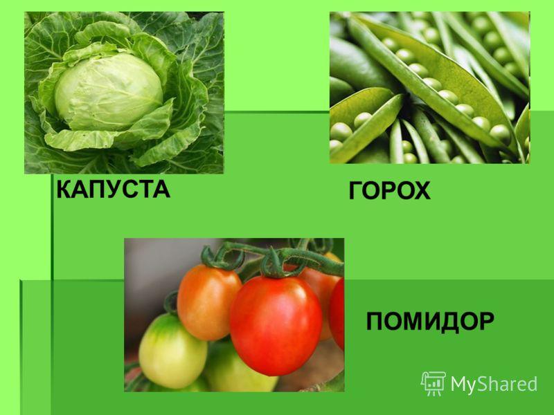 КАПУСТА ГОРОХ ПОМИДОР