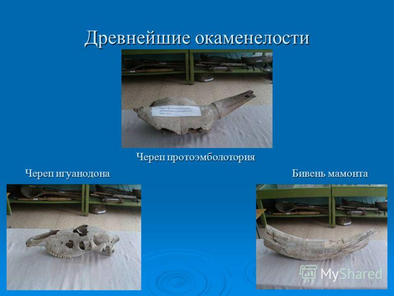 Древнейшие окаменелости Череп игуанодона Череп протоэмболотория Бивень мамонта