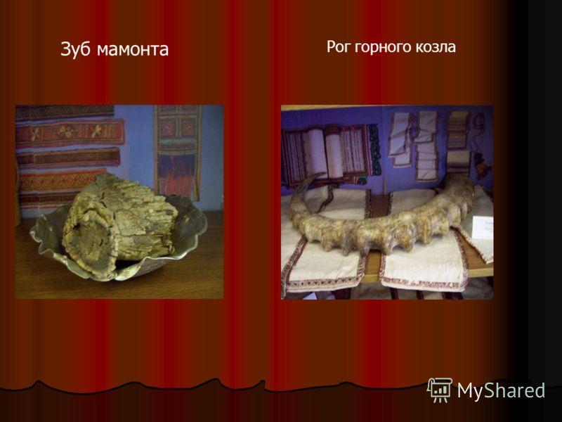 Зуб мамонта Рог горного козла