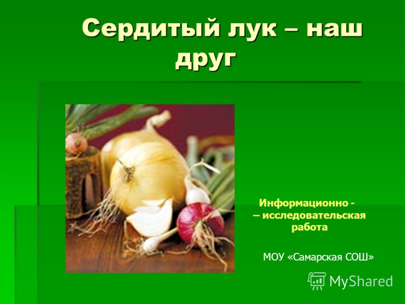 Сердитый лук – наш друг Сердитый лук – наш друг Информационно - – исследовательская работа МОУ «Самарская СОШ»