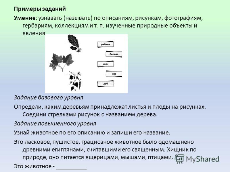 Примеры заданий Умение: узнавать (называть) по описаниям, рисункам, фотографиям, гербариям, коллекциям и т. п. изученные природные объекты и явления. Задание базового уровня Определи, каким деревьям принадлежат листья и плоды на рисунках. Соедини ст