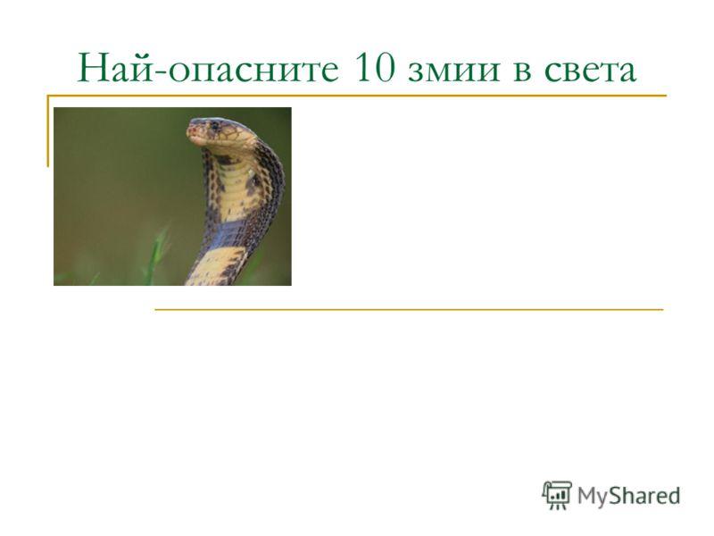 Най-опасните 10 змии в света