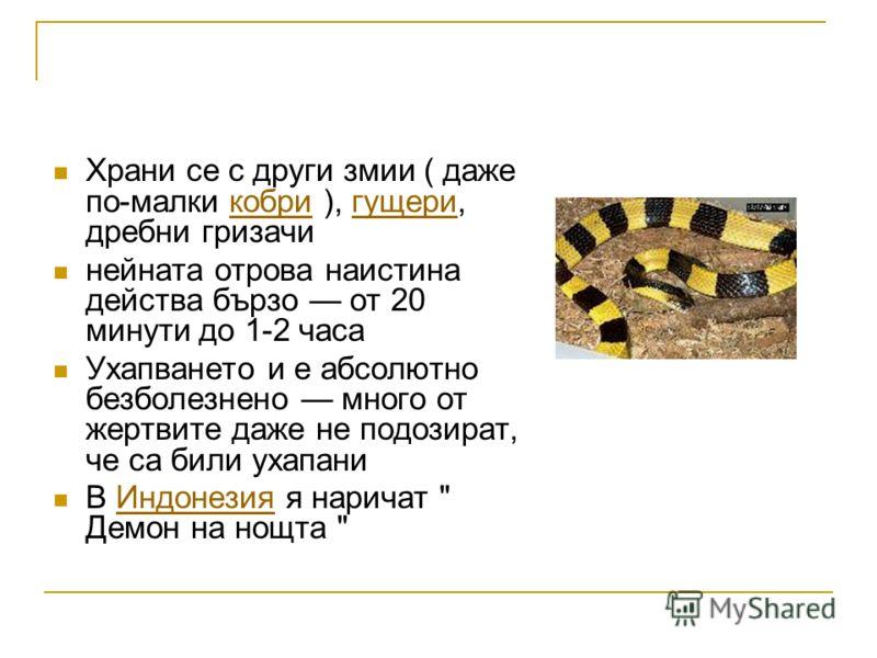 Храни се с други змии ( даже по-малки кобри ), гущери, дребни гризачикобригущери нейната отрова наистина действа бързо от 20 минути до 1-2 часа Ухапването и е абсолютно безболезнено много от жертвите даже не подозират, че са били ухапани В Индонезия