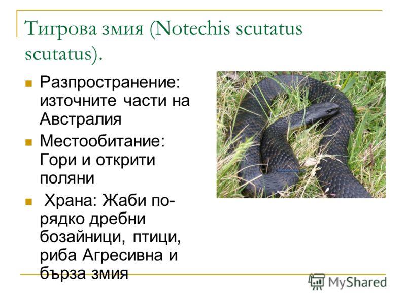 Тигрова змия (Notechis scutatus scutatus). Разпространение: източните части на Австралия Местообитание: Гори и открити поляни Храна: Жаби по- рядко дребни бозайници, птици, риба Агресивна и бърза змия