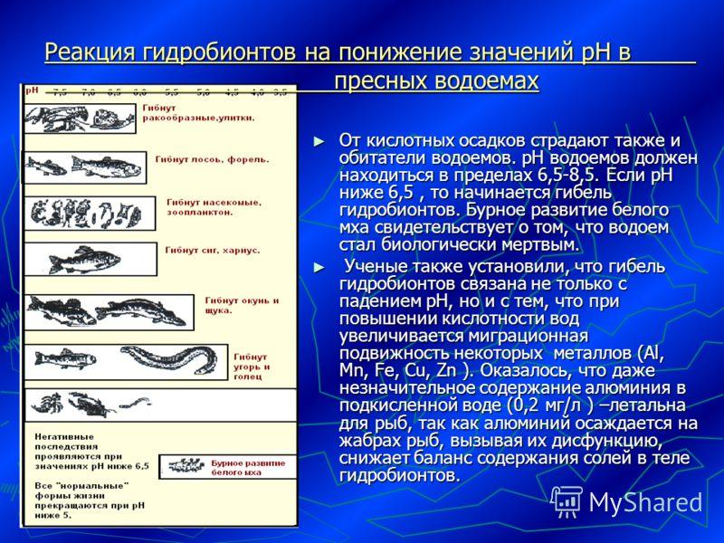 Реакция гидробионтов на понижение значений рН в пресных водоемах От кислотных осадков страдают также и обитатели водоемов. рН водоемов должен находиться в пределах 6,5-8,5. Если рН ниже 6,5, то начинается гибель гидробионтов. Бурное развитие белого м