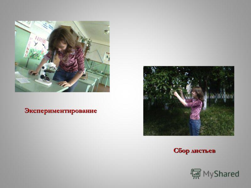 Экспериментирование Сбор листьев