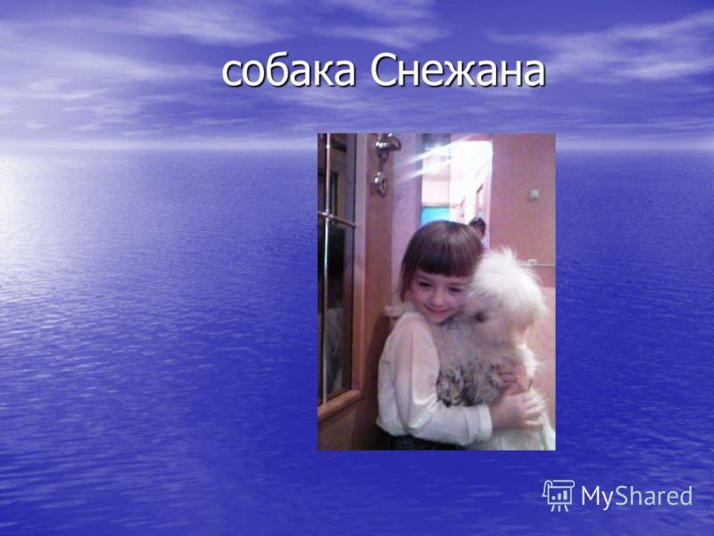 собака Снежана