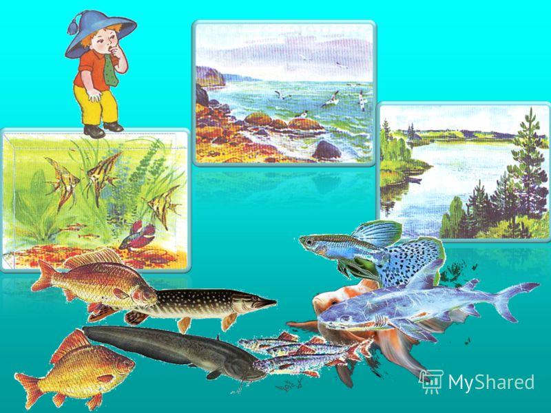 Игра «Куда по ̅ плывёт рыба?»