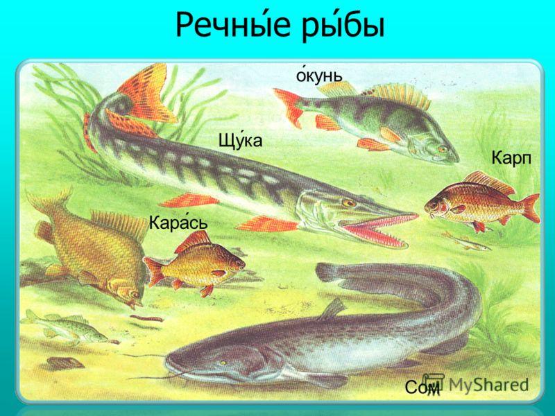 Мо̅рски́е ры́бы Сельдь Ка́мбала Ёрш Аку́ла Треска́ Ки́лька