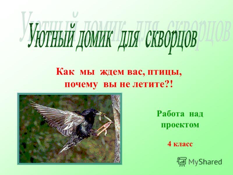 Как мы ждем вас, птицы, почему вы не летите?! Работа над проектом 4 класс
