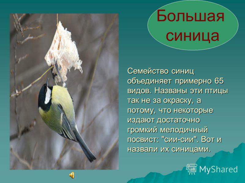 Насекомоядные птицы Насекомоядные птицы запасают на зиму насекомых, засовывая их в трещины коры. Кроме того, они расширяют свой рацион за счёт использования семян. Нередки случаи, когда эти птицы балуют себя кусочками сала. Синицы и поползни на осенн