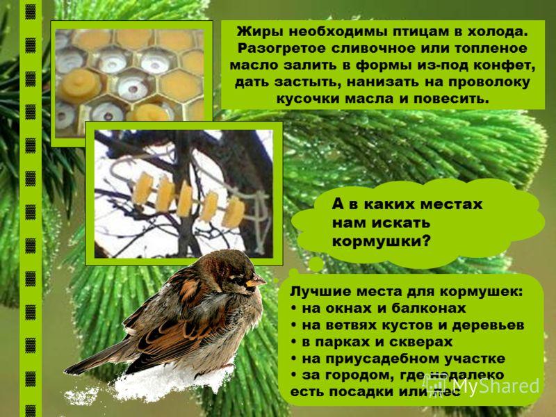 А в каких местах нам искать кормушки? Лучшие места для кормушек: на окнах и балконах на ветвях кустов и деревьев в парках и скверах на приусадебном участке за городом, где недалеко есть посадки или лес Жиры необходимы птицам в холода. Разогретое слив