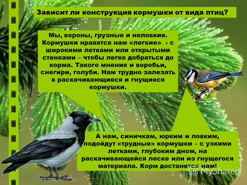 Зависит ли конструкция кормушки от вида птиц? Мы, вороны, грузные и неловкие. Кормушки нравятся нам «легкие» - с широкими летками или открытыми стенками – чтобы легко добраться до корма. Такого мнения и воробьи, снегири, голуби. Нам трудно залезать в
