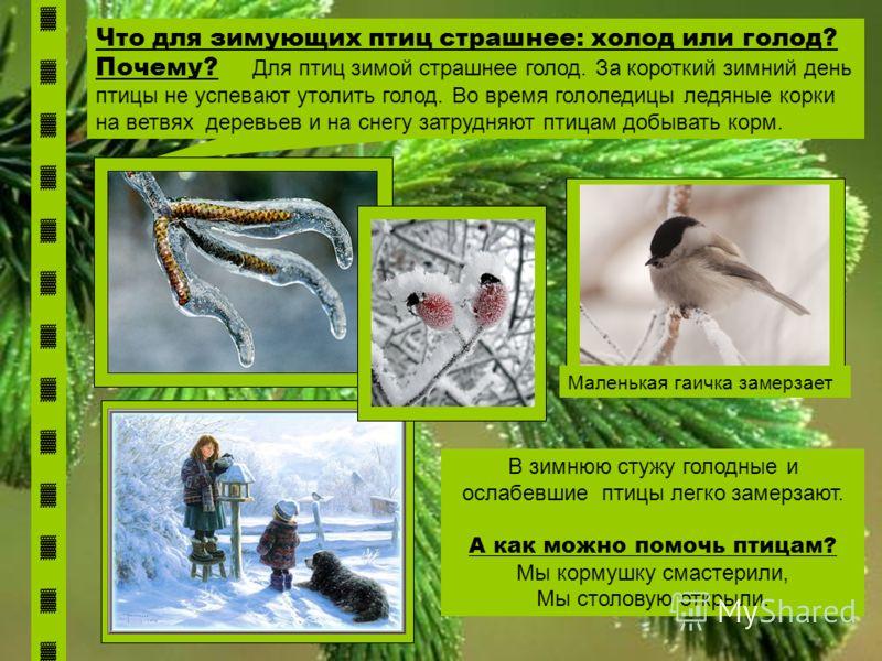 Что для зимующих птиц страшнее: холод или голод? Почему? Для птиц зимой страшнее голод. За короткий зимний день птицы не успевают утолить голод. Во время гололедицы ледяные корки на ветвях деревьев и на снегу затрудняют птицам добывать корм. В зимнюю