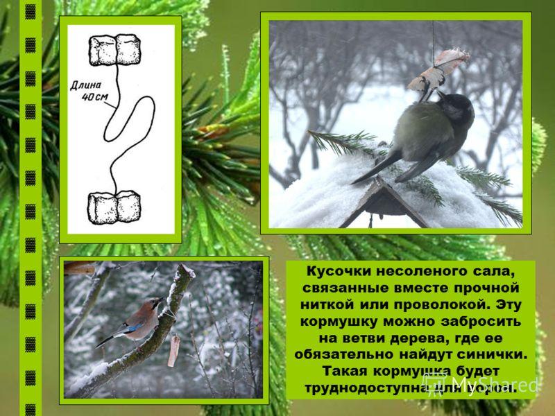 Кусочки несоленого сала, связанные вместе прочной ниткой или проволокой. Эту кормушку можно забросить на ветви дерева, где ее обязательно найдут синички. Такая кормушка будет труднодоступна для ворон.