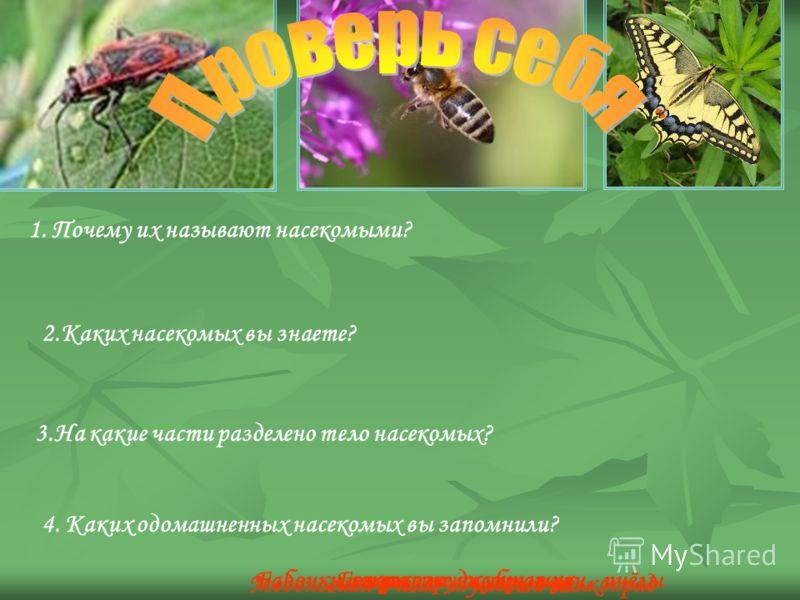 4. Каких одомашненных насекомых вы запомнили? 1. Почему их называют насекомыми? «покрытые насечками» 2.Каких насекомых вы знаете? 3.На какие части разделено тело насекомых? Голова, грудь, брюшкоБабочки, стрекозы, жуки, мухи, пчёлы Медоносная пчела, т