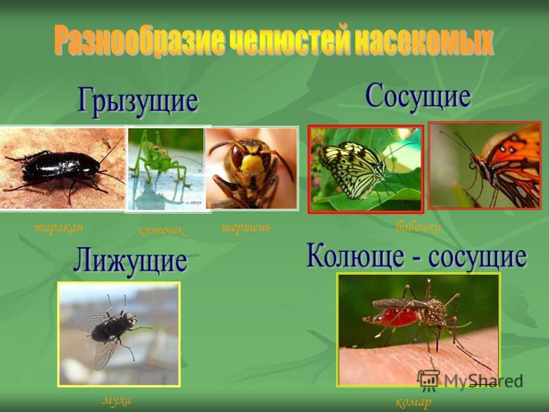 таракан кузнечик шершеньбабочки муха комар