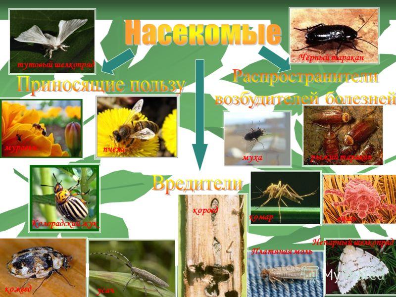 Чёрный таракан муха рыжий таракан усач комар Непарный шелкопряд короед Платяная моль вошь муравьи пчела тутовый шелкопряд Колорадский жук кожеед