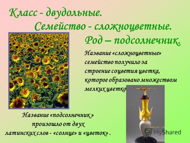 Класс - двудольные. Семейство - сложноцветные. Род – подсолнечник. Название «подсолнечник » произошло от двух латинских слов - «солнце» и «цветок». Название «сложноцветные» семейство получило за строение соцветия цветка, которое образовано множеством