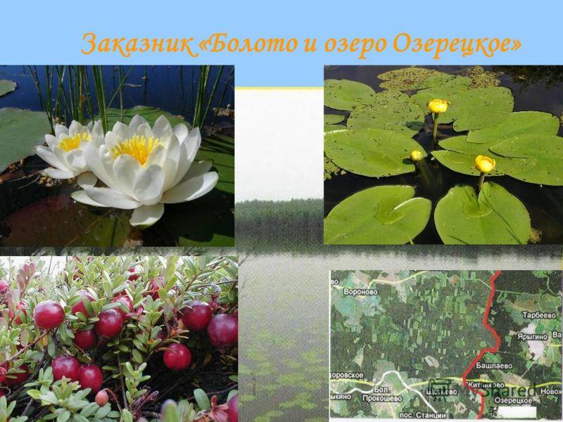 Заказник «Болото и озеро Озерецкое»