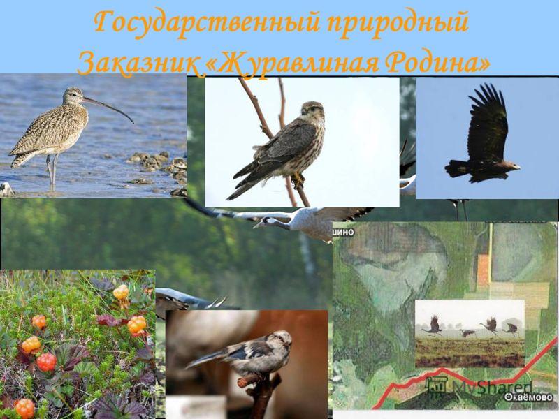 Государственный природный Заказник «Журавлиная Родина»